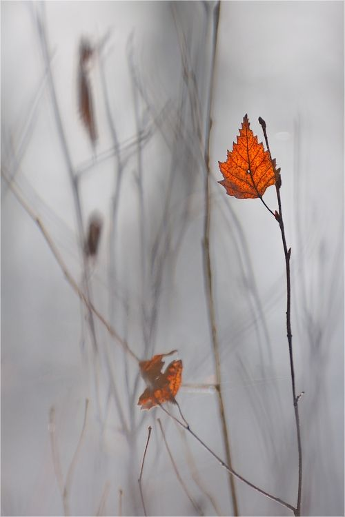 """~ Autumn ~ """"Things have their time, even eminence bows to timeliness."""" ~ Balthasar Gracian"""