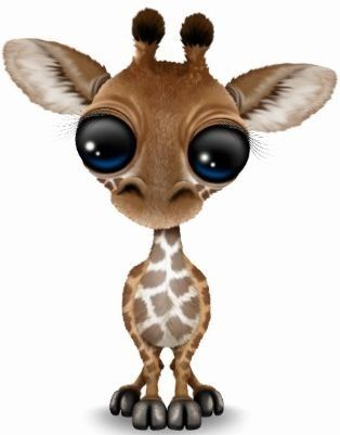 Cutest Baby Giraffe