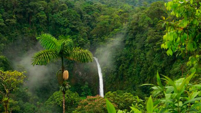 Resultado de imagen para jungle landscape