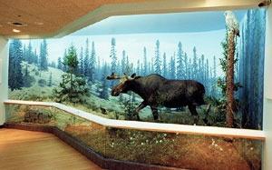 Royal Saskatchewan Museum.