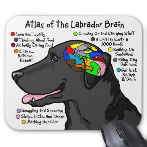 17 Best Images About We LOVE Labradors On Pinterest Lab Puppies Puppys And Yellow Labrador