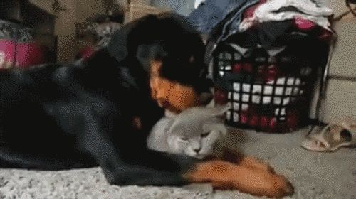 It�s just kisses all day long with these two. | This Sweet Rottweiler Loves A Cat More Than You Love Anything
