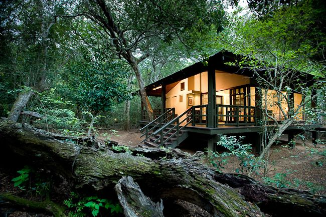 Phinda Forest Lodge, South Africa. @Lauren Davison Davison Dunn This would be incredible!