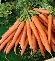 17 Images About Growing Carrots On Pinterest Container 400 x 300