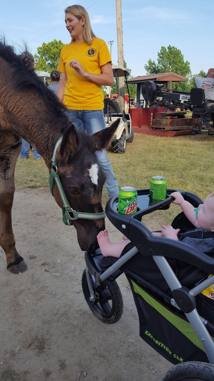 Percheron foal...meet baby human! #Percheron #Horse #Babies #Cute