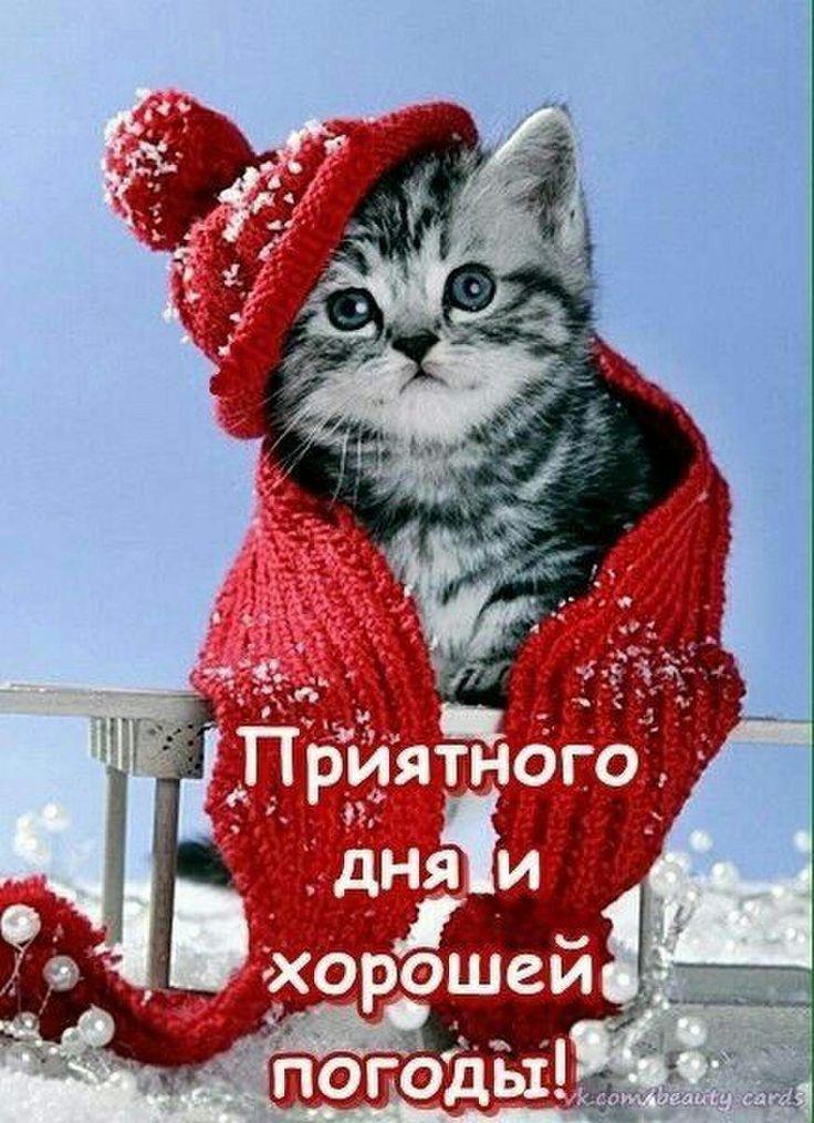 День, добрый день котик любимый открытки