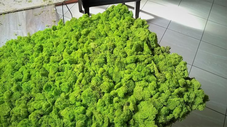 Handmade panel with reindeer moss on OSB 8mm. Spring Green or 30 other colors. To order at www.greenalleys.com.pl