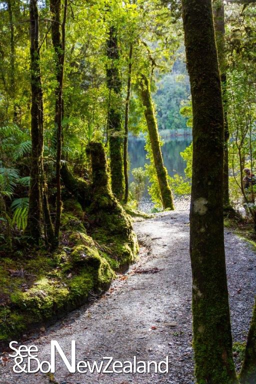 New Zealand is covered in natural wonders everywhere you look. This is a walkway through some rainforest to a beautiful lake which takes about half an hour. These bush walkes are right throughout New Zealand and range from 10 minutes to several days.  www.SeeandDo.co.nz
