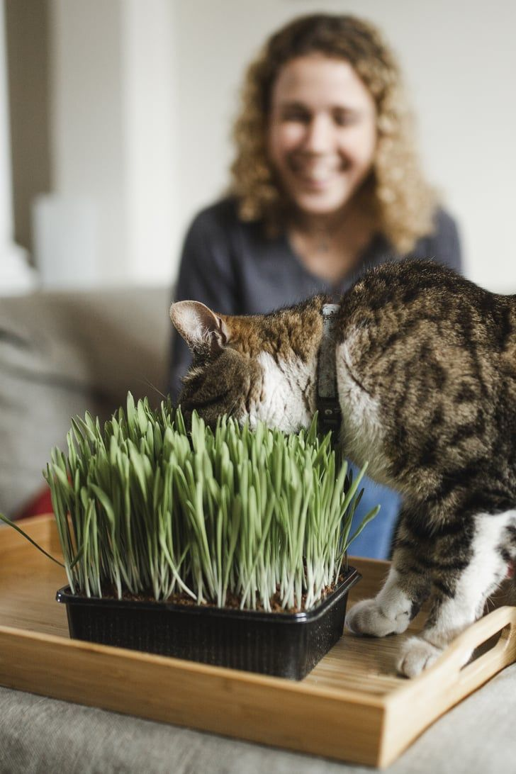 Forget Buying Treats These 7 Edible Plants Are Basically Snacks For Your Hungry Cat Air Purifying House Plants Edible Plants Cat Safe Plants