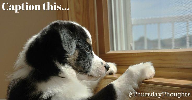 Caption this #cute #doggie for #ThursdayThoughts Heart My Dog Anita Oscar Nizeti