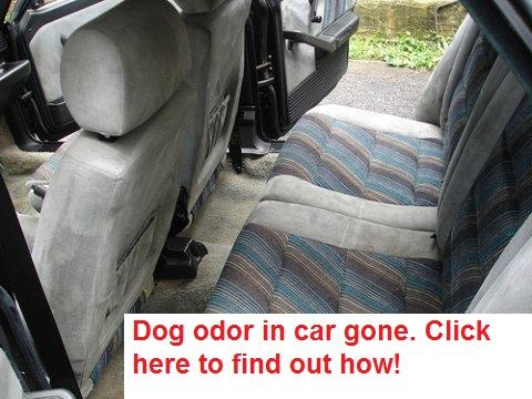 Dog odor in a vehicle can last for years. We have a FREE technique for removing dog odor at our website