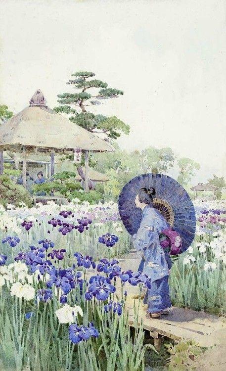 Purple Iris                                                       …