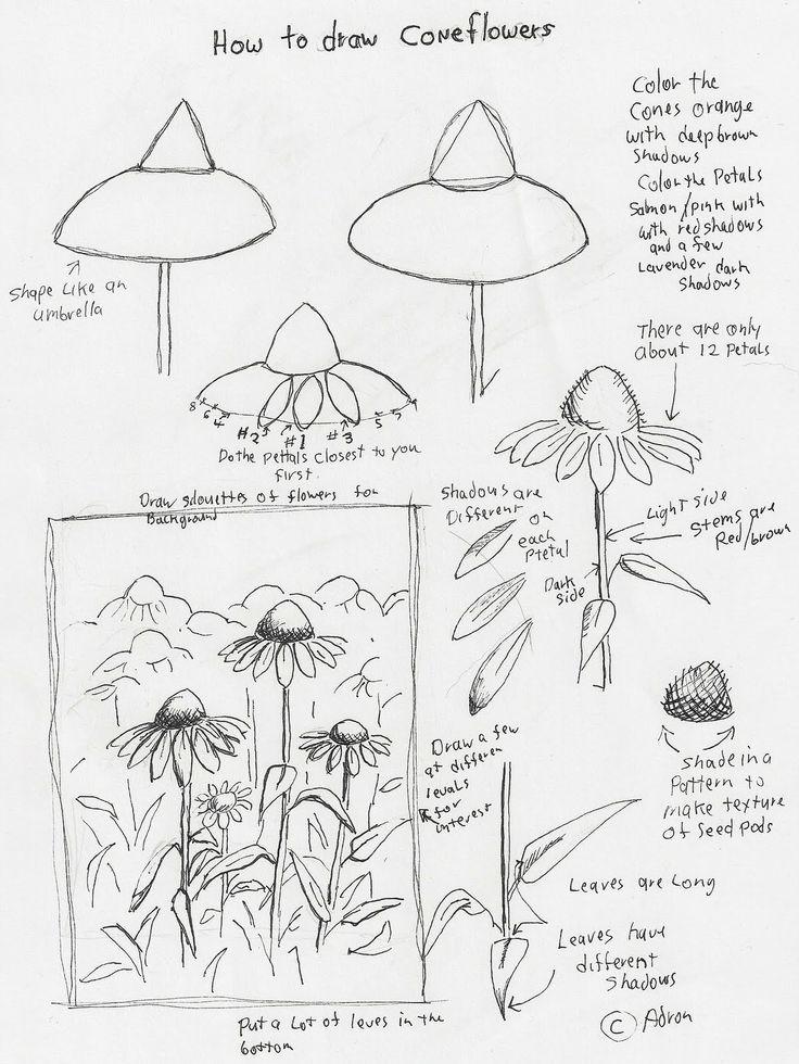 coneflower art lesson - Google Search
