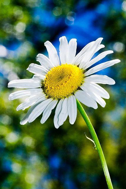 Bokeh of Flower