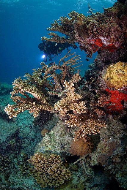 Beautiful Coral Reef at Anambas | Flickr - Photo Sharing!