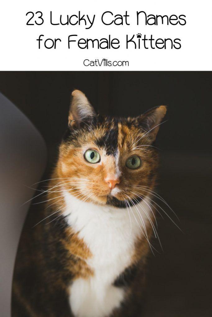 46 Lucky Cat Names For Your New Kitten Catvills In 2020 Cat Names Cute Cat Names Lucky Cat