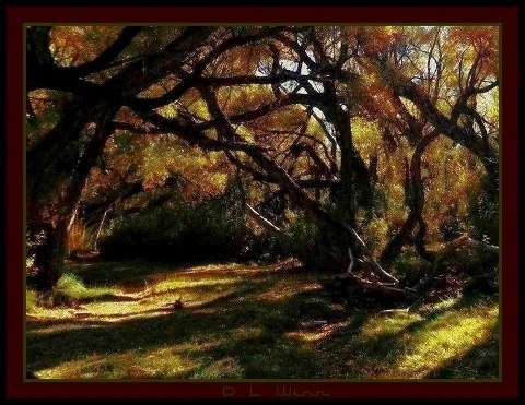 Photographer Dianna Winn Rancho San Rafael Park Reno
