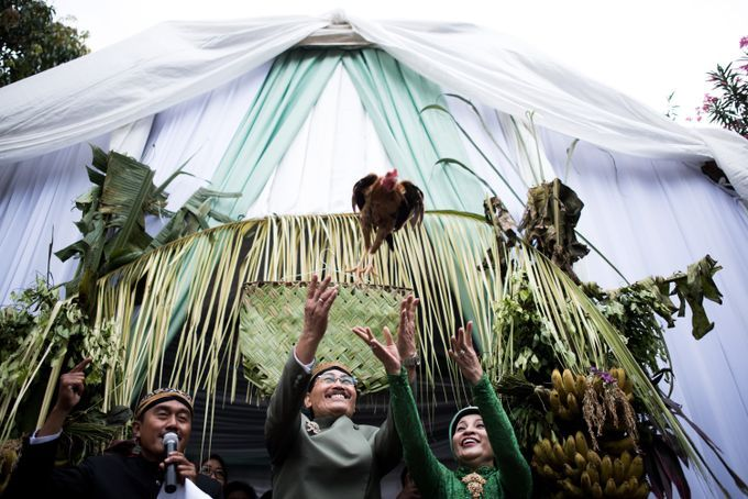 Pada pernikahan adat Jawa, orangtua dari pengantin perempuan akan melepas ayam betina sebagai tanda kesiapan dan kerelaan mereka melepas putri mereka menuju pernikahan.
