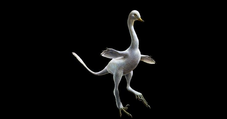 Newly Discovered Duck-Like Dinosaur Had a Neck Like a Goose And Velociraptor Claws - Weird Facts About Life