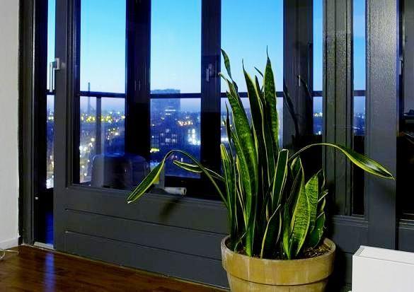 Rośliny oczyszczające powietrze  http://www.cyberbaba.pl/zdrowy-dom/2407-rosliny-oczyszczajace-powietrze?start=2 L #rosliny #poradnik #pielegnacja #plants #flower #care #flowercare #instruction