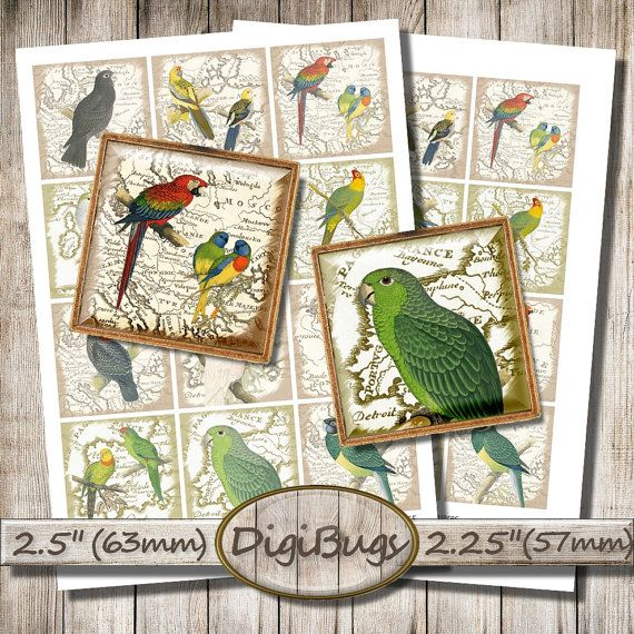 Printable Parrot Images, Vintage Map, Digital Collage Sheet, 2.5 inch & 2.25 inch Squares, Parrot Decoupage Paper, Instant Download, a2