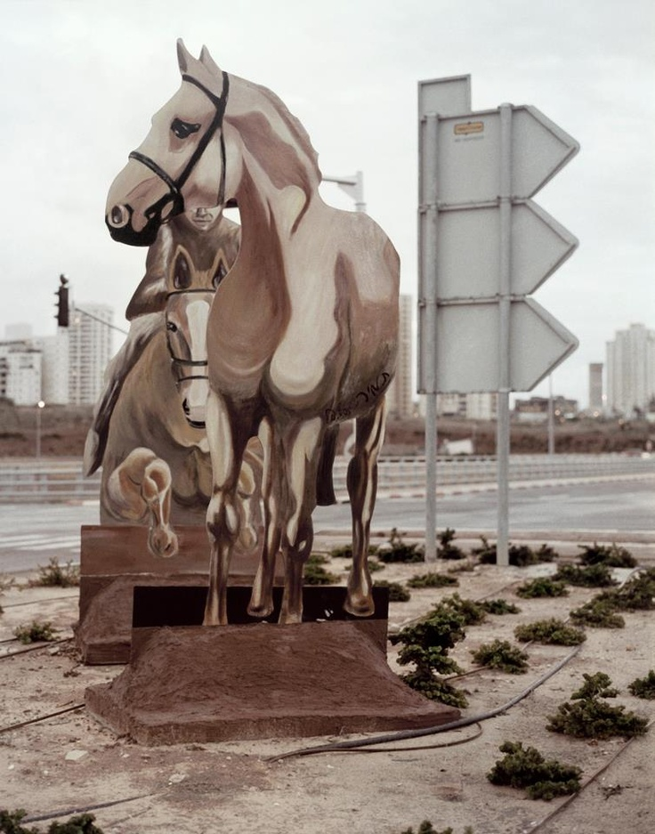 Gali Gurevich-Noneplace (horses)