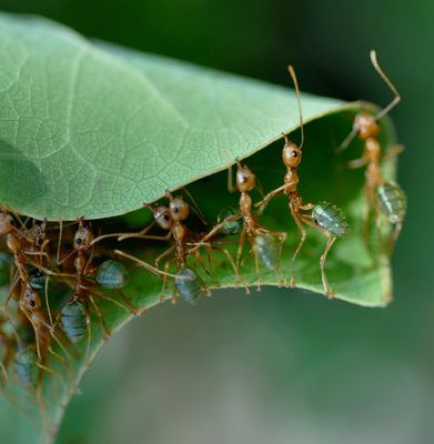 51 best Ameisen images on Pinterest Ants, Ant and Bugs - ameisen in der k che was tun