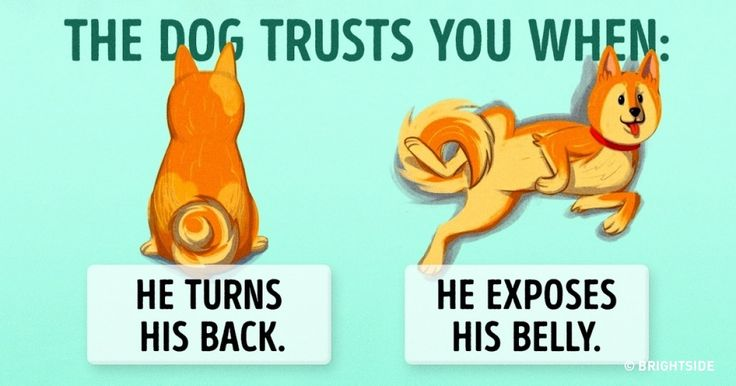 16useful clues for anyone who wants tounderstand dogs better