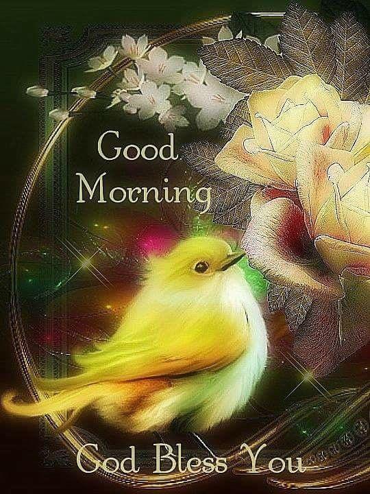 Good Morning, God Bless You  good morning good morning quotes good morning sayings good morning image quotes