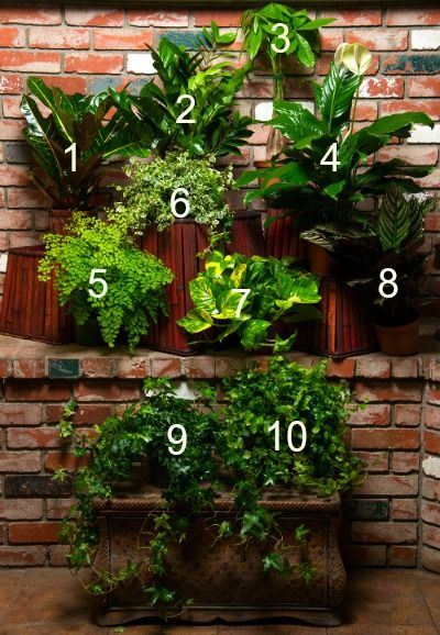 39 best Air Purifying House Plants images on Pinterest