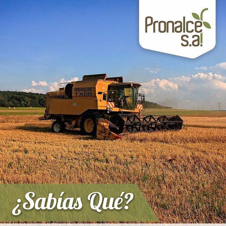 ¿ #SabíasQue en la actualidad se utiliza maquinaria automotriz para la cosecha del #trigo? #HistoriaPronalce  #Pronalce #Avena #Wheat #Trigo #Cereal #Granola #Fit #Oats #ComidaSaludable #Yummy #Delicious #Tasty #Instagood #Delicioso #Sano #HealthyFood #Breakfast #Protein #Nutrición #Cereales