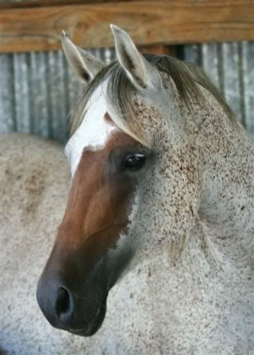 Her equine facial lips mature beauty
