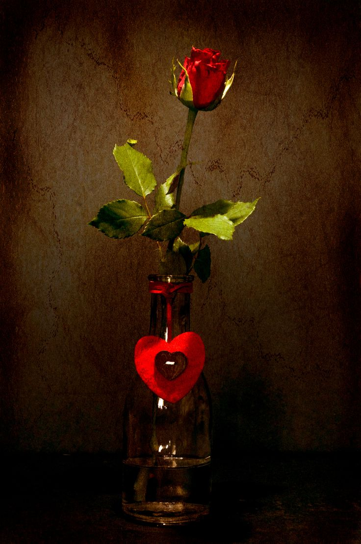 https://flic.kr/p/E65rNX | Valentine Rose | Small red rose in a bottle.