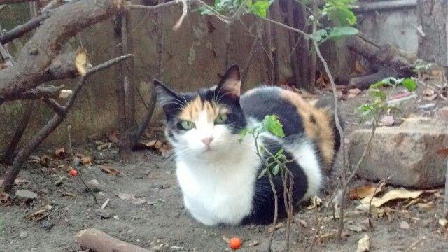 #Cat in bogotá