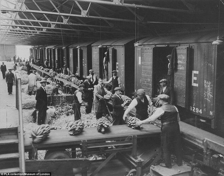 Hard work: The West India Docks of east London are pictured circa 1935, with bananas being loaded onto rail trucks on the North Quay of the Export Dock