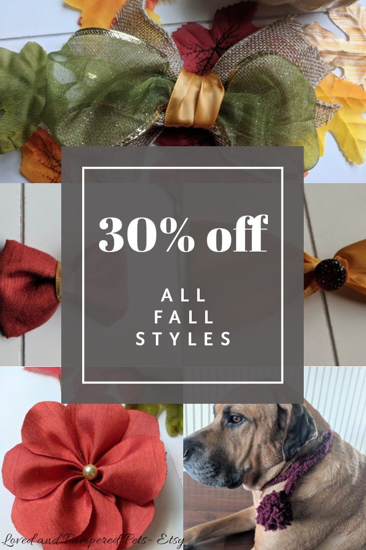 Cute Dog Bows Doggie Bow Ties And More Find The Perfect Accessory For Your Dog This Fall All Fall Styles On Sale Though November 15th S Pet Fashion