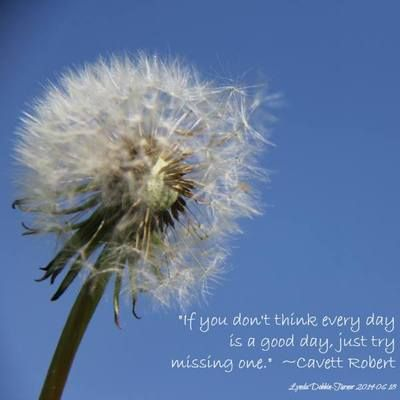 """""""If you don't think every #day is a good day, just try missing one."""" ~Cavett Robert dandelion at Lavenham"""