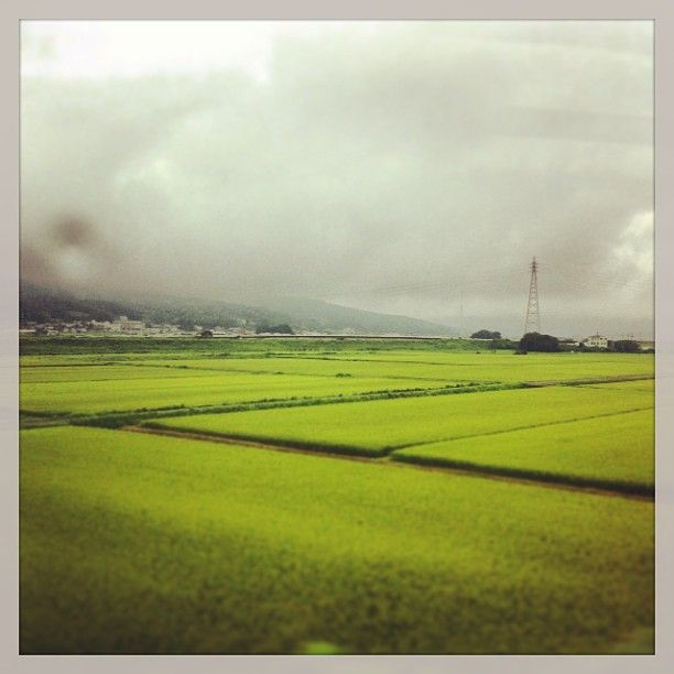 Japan is all about rice fields, everywhere...