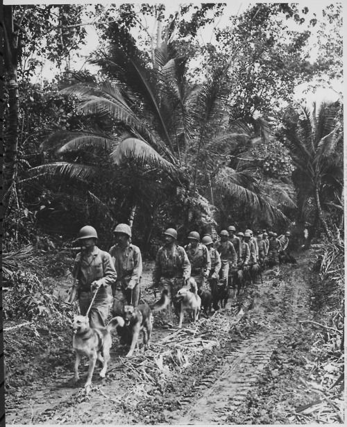 U.S. Marine `Raiders' and their dogs, which are used for scouting and running messages, starting off for the jungle front lines on Bougainville, November-December 1943.  Source: National Archives and Records Administration