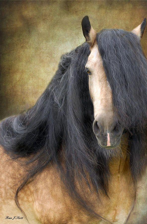 les 400 meilleures images du tableau animaux chevaux sur pinterest beaux chevaux jolis. Black Bedroom Furniture Sets. Home Design Ideas