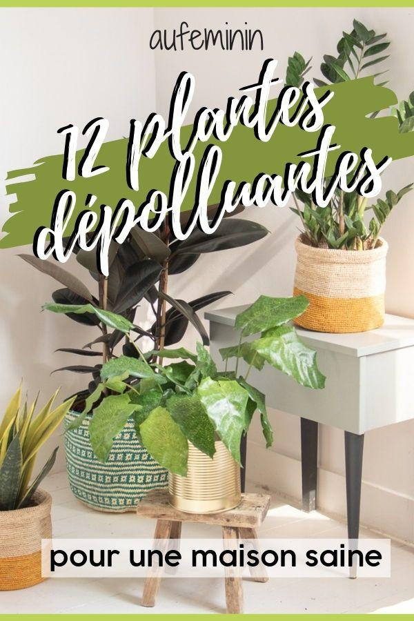 Plantes Dépolluantes Pour La Maison : plantes, dépolluantes, maison, Plantes, Dépolluantes, Avoir, Dépolluantes,, Plante,, Purifient, L'air