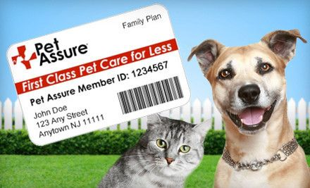 Pet Insurance - For an insurance policy that covers costs related to unexpected accidents and illnesses, you should go for insurance that has emergency and illness coverage