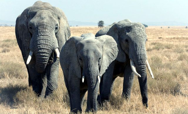 Elephant Nature Park Cancellation