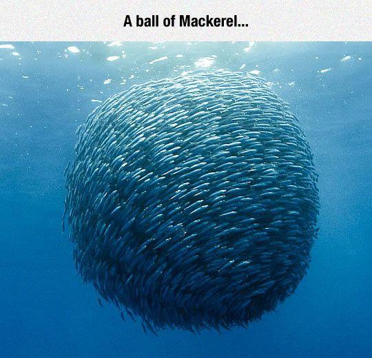 Ocean Fish Ball