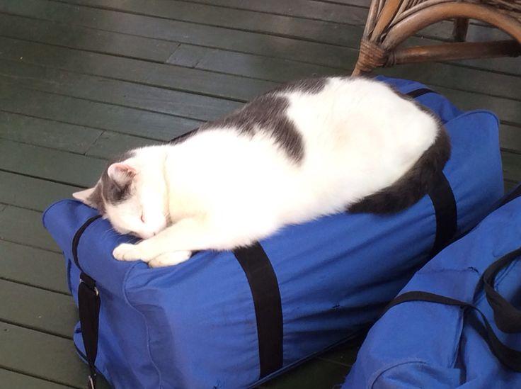 Yoga Nidra for cats on a bag of yoga mats. #cats #yoganidra #sleepingcats
