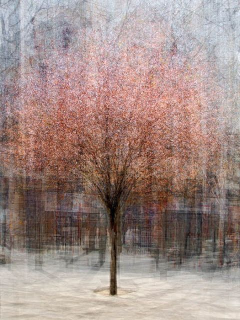 Pink Blossom Tree by Pep Ventosa