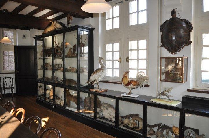 Natuurhistorisch museum Maastricht   Hermans Rariteitenkabinet