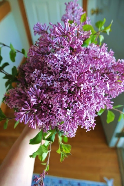Lilacs from the garden...I love spring!: Gardens Ideas, New Home, Gardens Flowing, Favorite Flowers, Flowers Fragance Beauty Colors, Lilacs Bush, Flowers Lilacs, Lilacs I, Gardens Mi Favorite