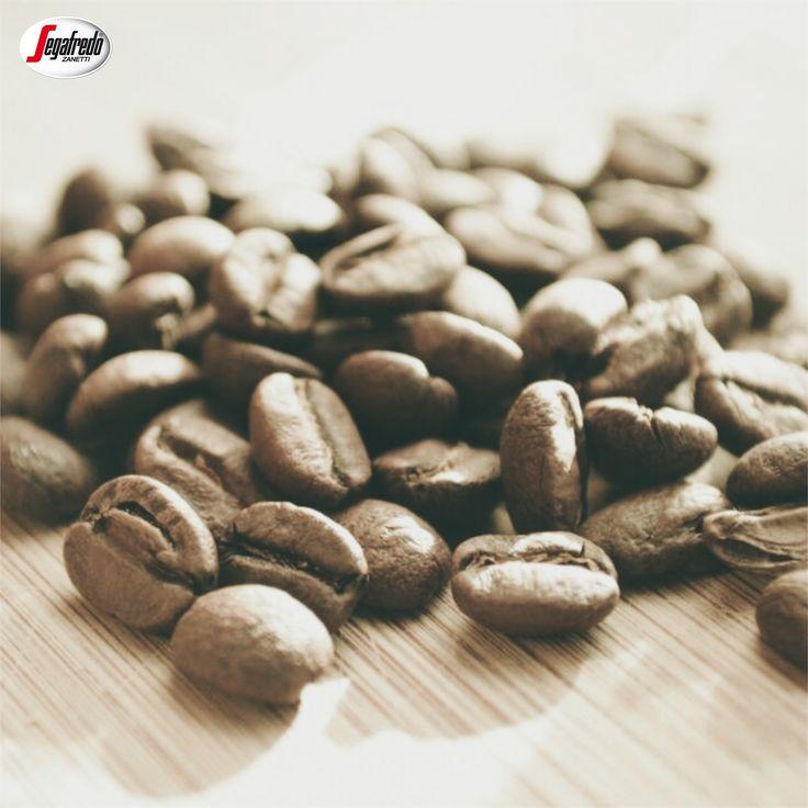 Czy wiecie, że palona kawa ma około 1000 aromatów? Wprawny barista potrafi rozpoznać aż 200 z nich! #segafredo #segafredozanetti #segafredozanettipoland #ziarna #beans #aromat #zapach #kawa #coffee