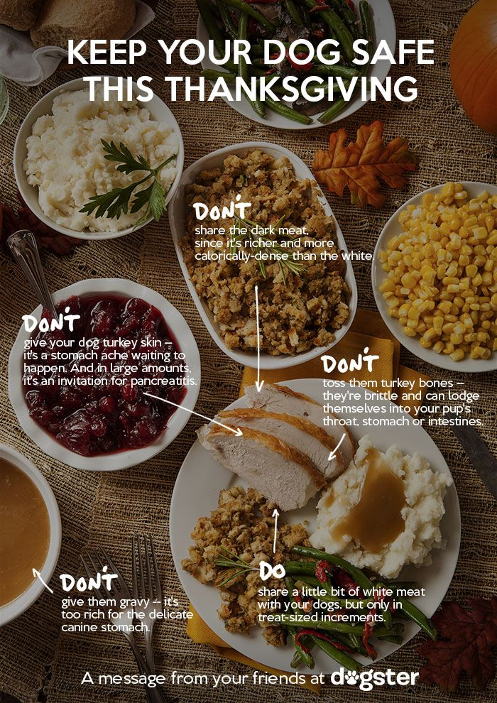 For Thanksgiving, Help Spread the Word on Food Safety for Dogs | Dogster